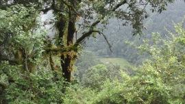 brown ferns